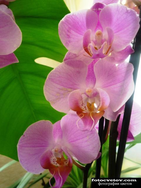 Цветы орхидеи фото с названиями