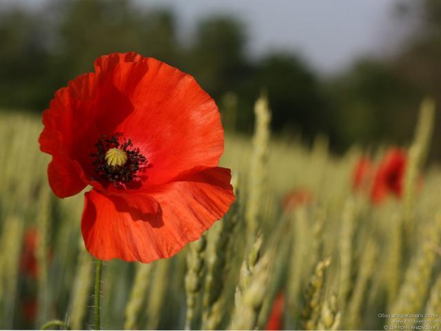 Домашние цветы фото и название