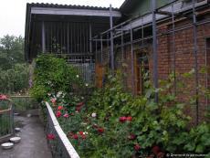 Садовые многолетние цветы на даче
