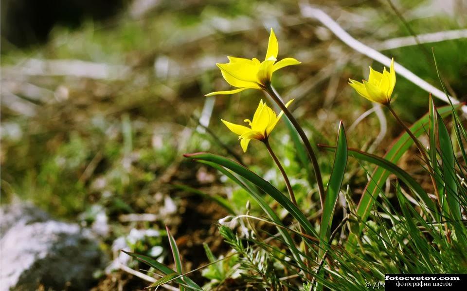 Крым весенние цветы фото