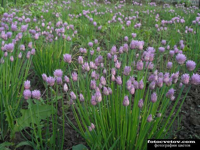 Комнатные цветы волгодонск купить
