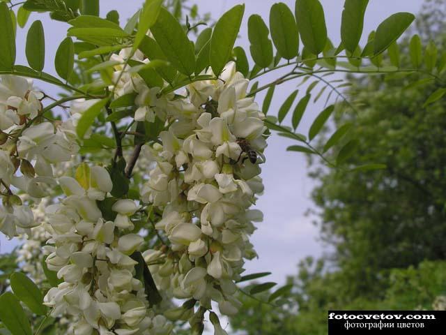 Декоративные цветы комнатные